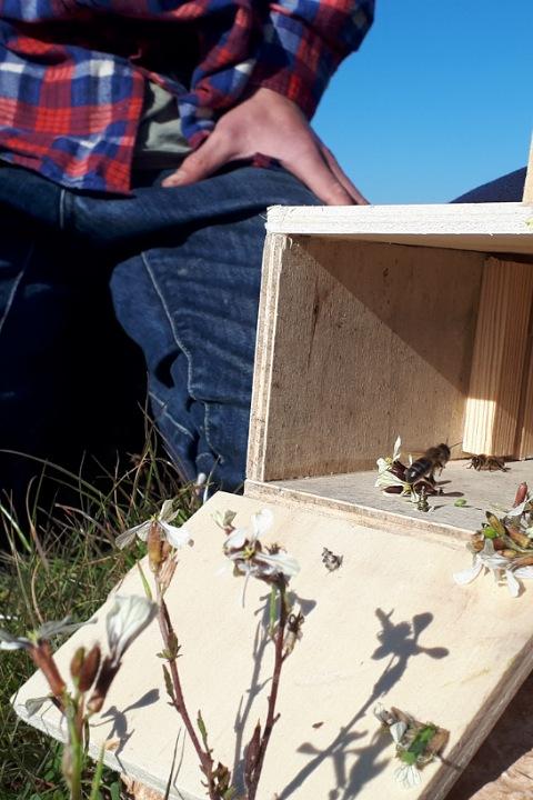 Die Kunst der Bienenjagd